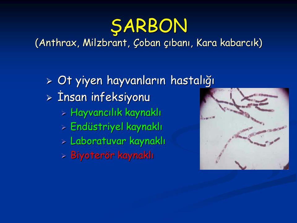 ŞARBON (Anthrax, Milzbrant, Çoban çıbanı, Kara kabarcık)  Ot yiyen hayvanların hastalığı  İnsan infeksiyonu  Hayvancılık kaynaklı  Endüstriyel kay