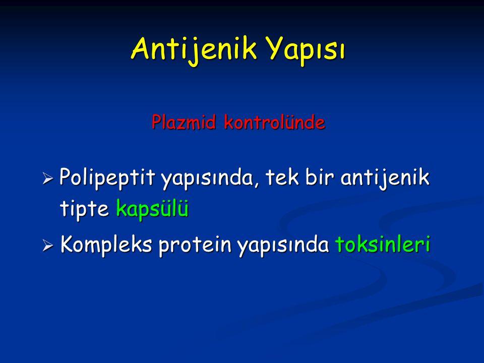 Antijenik Yapısı  Polipeptit yapısında, tek bir antijenik tipte kapsülü  Kompleks protein yapısında toksinleri Plazmid kontrolünde