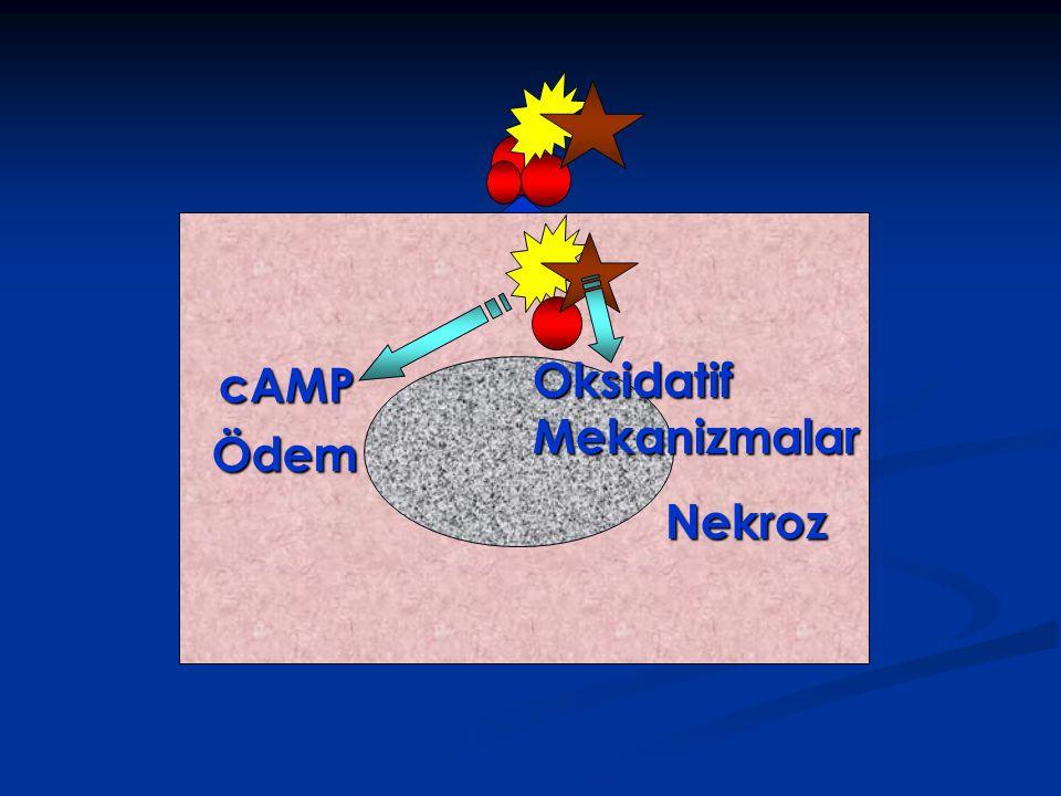 cAMP Ödem Nekroz OksidatifMekanizmalar