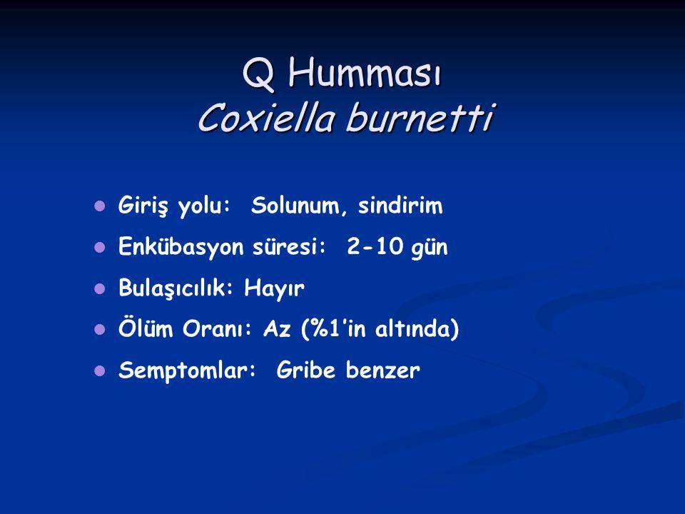 Q Humması Coxiella burnetti Giriş yolu: Solunum, sindirim Enkübasyon süresi: 2-10 gün Bulaşıcılık: Hayır Ölüm Oranı: Az (%1'in altında) Semptomlar: Gr