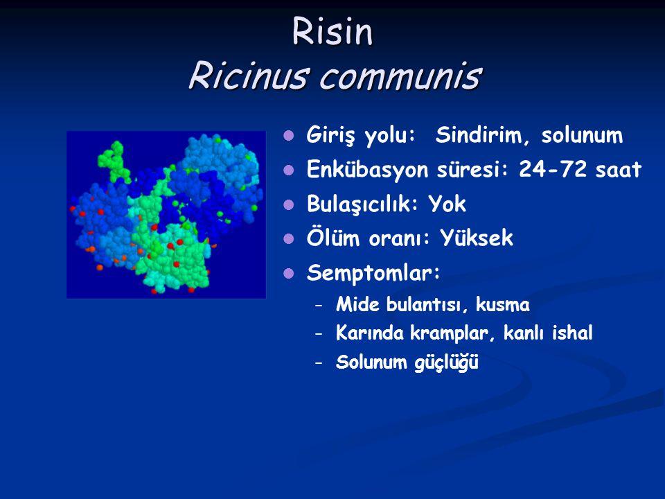Risin Ricinus communis Giriş yolu: Sindirim, solunum Enkübasyon süresi: 24-72 saat Bulaşıcılık: Yok Ölüm oranı: Yüksek Semptomlar: – – Mide bulantısı,