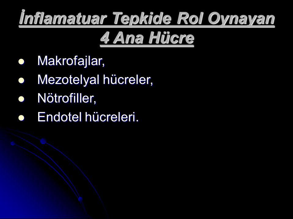 İnflamatuar Tepkide Rol Oynayan 4 Ana Hücre Makrofajlar, Makrofajlar, Mezotelyal hücreler, Mezotelyal hücreler, Nötrofiller, Nötrofiller, Endotel hücr