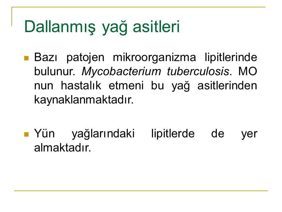 Dallanmış yağ asitleri Bazı patojen mikroorganizma lipitlerinde bulunur. Mycobacterium tuberculosis. MO nun hastalık etmeni bu yağ asitlerinden kaynak