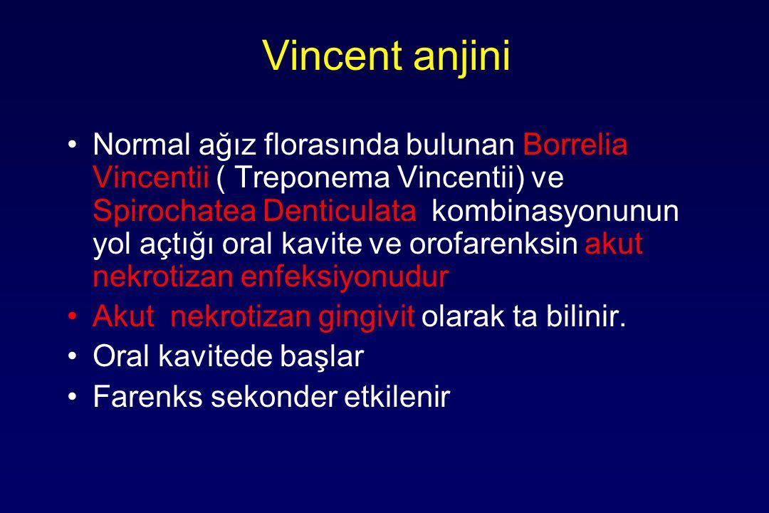 Vincent anjini Normal ağız florasında bulunan Borrelia Vincentii ( Treponema Vincentii) ve Spirochatea Denticulata kombinasyonunun yol açtığı oral kavite ve orofarenksin akut nekrotizan enfeksiyonudur Akut nekrotizan gingivit olarak ta bilinir.