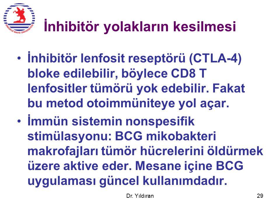 İnhibitör yolakların kesilmesi İnhibitör lenfosit reseptörü (CTLA-4) bloke edilebilir, böylece CD8 T lenfositler tümörü yok edebilir.