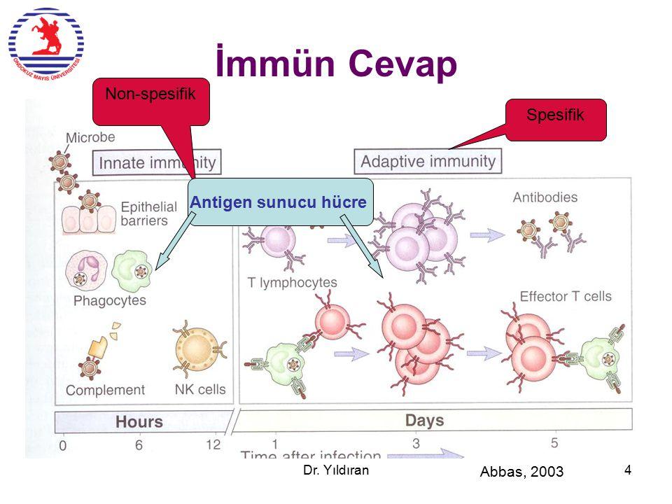 Antijen işleme CD4  IL-2, IFNG CD8  Perforin, granzym ER: Endoplasmic Reticulum Antigen Presenting Cell Dr.