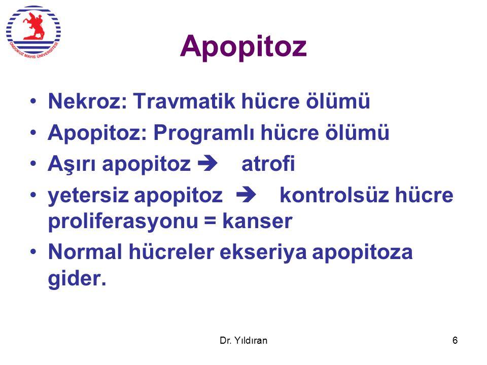 Apopitoz Nekroz: Travmatik hücre ölümü Apopitoz: Programlı hücre ölümü Aşırı apopitoz  atrofi yetersiz apopitoz  kontrolsüz hücre proliferasyonu = kanser Normal hücreler ekseriya apopitoza gider.