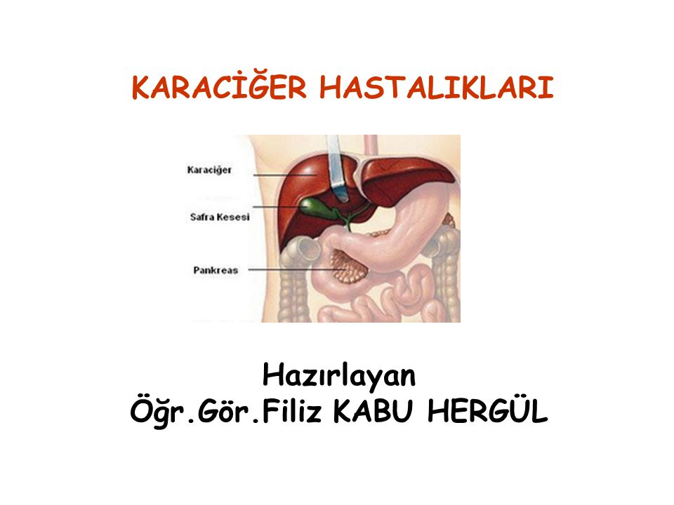 KARACİĞER Karaciğer organizmanın metabolizması için gerekli pek çok madde üreten, depolayan ve salgılayan en büyük bezdir.