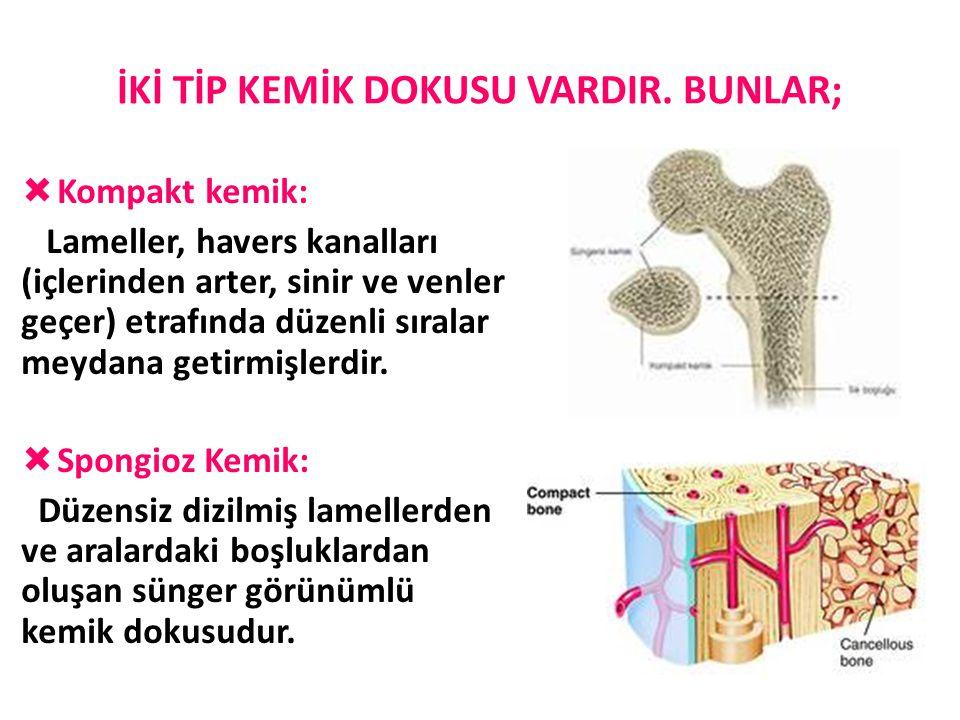 İKİ TİP KEMİK DOKUSU VARDIR. BUNLAR;  Kompakt kemik: Lameller, havers kanalları (içlerinden arter, sinir ve venler geçer) etrafında düzenli sıralar m
