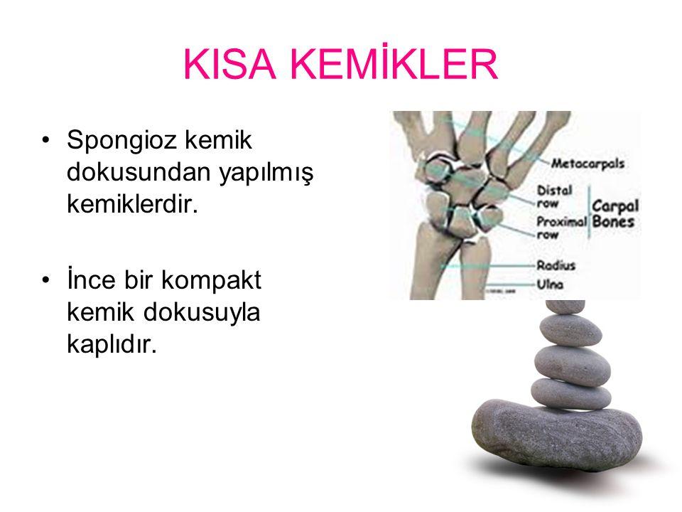 KISA KEMİKLER Spongioz kemik dokusundan yapılmış kemiklerdir. İnce bir kompakt kemik dokusuyla kaplıdır.