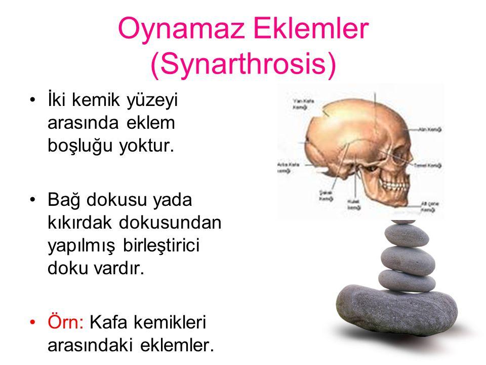 Oynamaz Eklemler (Synarthrosis) İki kemik yüzeyi arasında eklem boşluğu yoktur. Bağ dokusu yada kıkırdak dokusundan yapılmış birleştirici doku vardır.