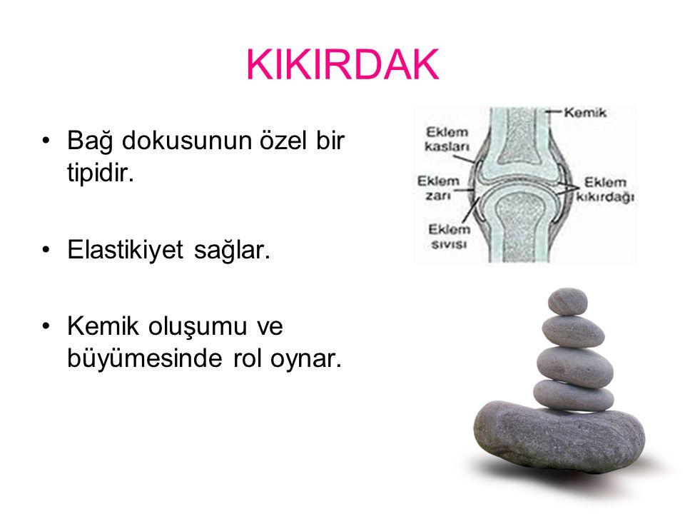 KIKIRDAK Bağ dokusunun özel bir tipidir. Elastikiyet sağlar. Kemik oluşumu ve büyümesinde rol oynar.