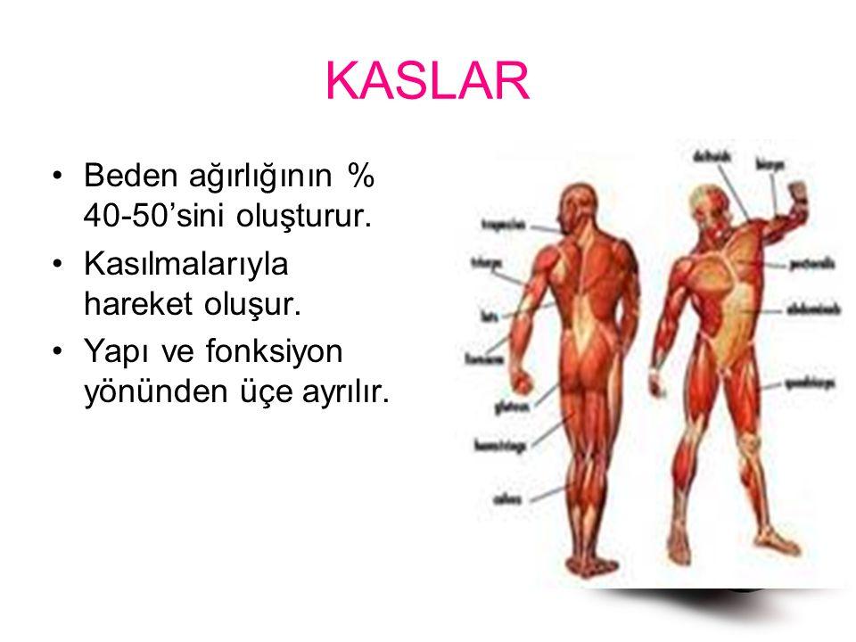 KASLAR Beden ağırlığının % 40-50'sini oluşturur. Kasılmalarıyla hareket oluşur. Yapı ve fonksiyon yönünden üçe ayrılır.