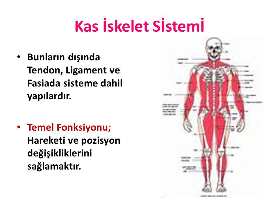Kas İskelet Sİstemİ Bunların dışında Tendon, Ligament ve Fasiada sisteme dahil yapılardır. Temel Fonksiyonu; Hareketi ve pozisyon değişikliklerini sağ