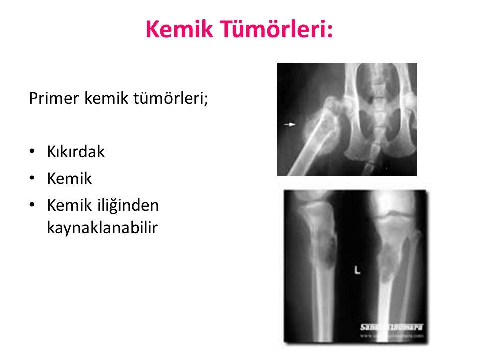 Kemik Tümörleri: Primer kemik tümörleri; Kıkırdak Kemik Kemik iliğinden kaynaklanabilir
