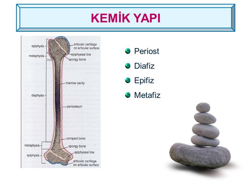 İRREGÜLER KEMİKLER Farklı şekildeki kemiklerdir. Yapısı diğer kemiklerle aynıdır.
