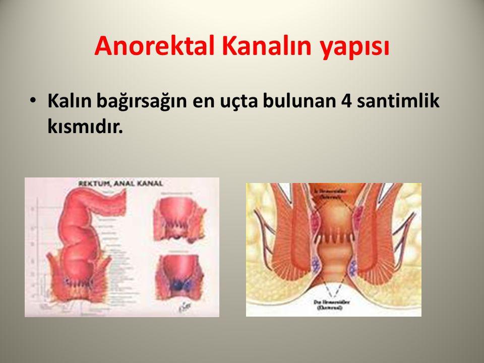 Anorektal Kanalın yapısı Kalın bağırsağın en uçta bulunan 4 santimlik kısmıdır.