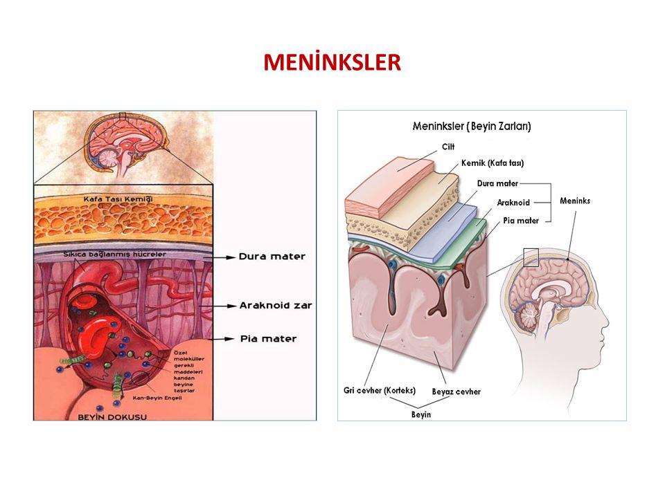 MENİNKSLER ARASINDAKİ BOŞLUKLAR EPİDURAL ARALIK Duramater ile kemik doku arasındaki mesafe SUBDURAL ARALIK Dura mater ile arachnoid membran arasındaki mesafe SUBARACHNOİD ARALIK Arachnoid ve pia mater arasındaki mesafe
