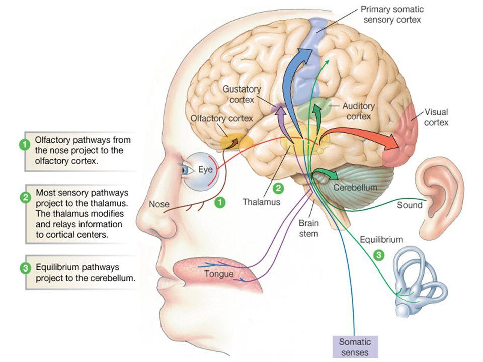 2-Emosyonel Girişimler:  Anksiyete önleme ve kontrol  Benlik Kontrolünü Geliştirme