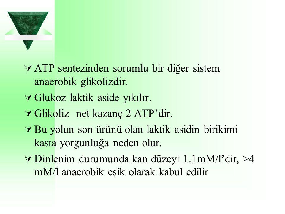  ATP sentezinden sorumlu bir diğer sistem anaerobik glikolizdir.  Glukoz laktik aside yıkılır.  Glikoliz net kazanç 2 ATP'dir.  Bu yolun son ürünü