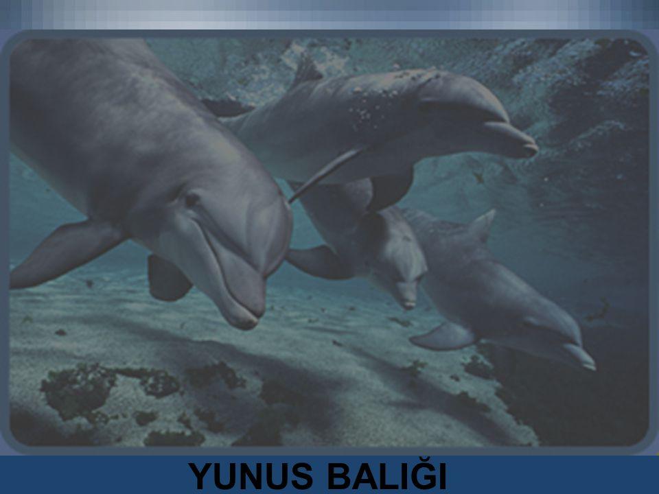 YUNUS BALIĞI