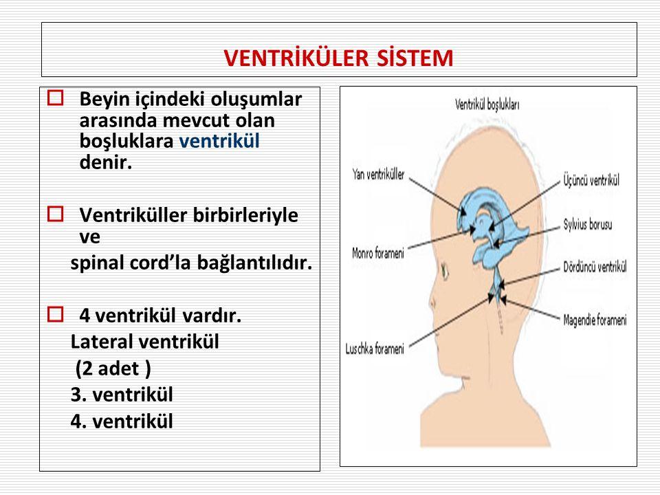 VENTRİKÜLER SİSTEM  Beyin içindeki oluşumlar arasında mevcut olan boşluklara ventrikül denir.  Ventriküller birbirleriyle ve spinal cord'la bağlantı