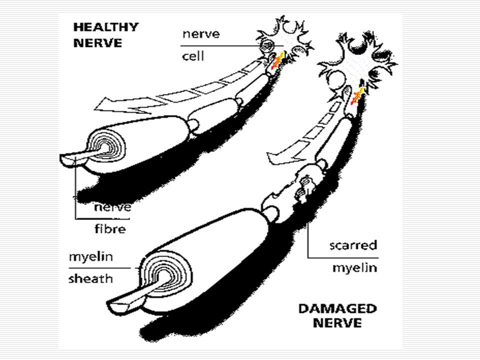 VENTRİKÜLER SİSTEM  Beyin içindeki oluşumlar arasında mevcut olan boşluklara ventrikül denir.