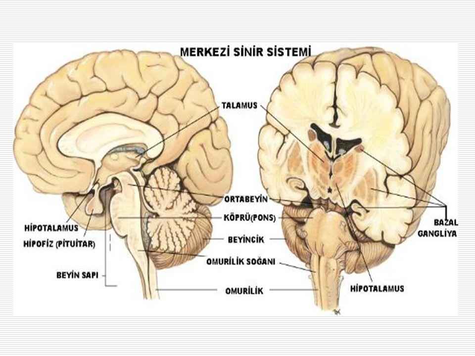 BEYİN Dört ana bölüme ayrılır 1.Serebrum 2.Diensefalon 3.Serebellum 4.Beyin sapı