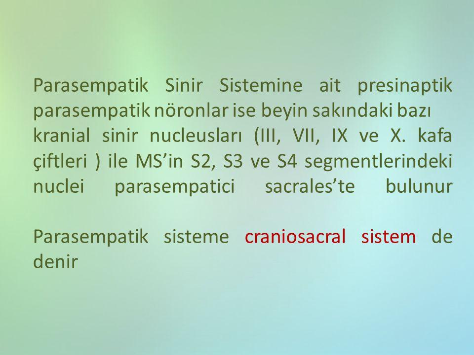 Parasempatik Sinir Sistemine ait presinaptik parasempatik nöronlar ise beyin sakındaki bazı kranial sinir nucleusları (III, VII, IX ve X. kafa çiftler