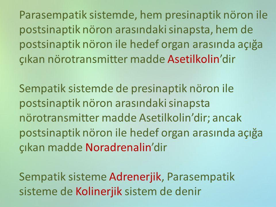Parasempatik sistemde, hem presinaptik nöron ile postsinaptik nöron arasındaki sinapsta, hem de postsinaptik nöron ile hedef organ arasında açığa çıka