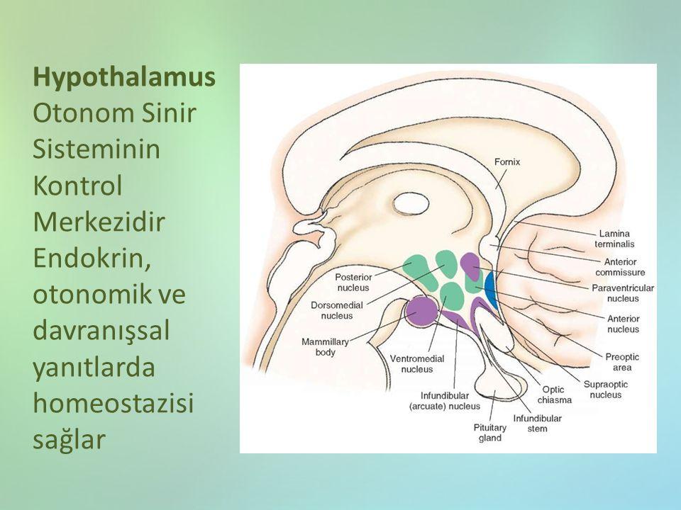 Hypothalamus Otonom Sinir Sisteminin Kontrol Merkezidir Endokrin, otonomik ve davranışsal yanıtlarda homeostazisi sağlar
