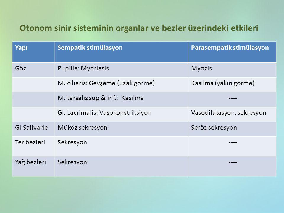 Otonom sinir sisteminin organlar ve bezler üzerindeki etkileri YapıSempatik stimülasyonParasempatik stimülasyon GözPupilla: MydriasisMyozis M. ciliari