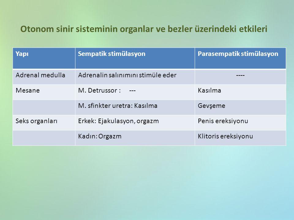 Otonom sinir sisteminin organlar ve bezler üzerindeki etkileri YapıSempatik stimülasyonParasempatik stimülasyon Adrenal medullaAdrenalin salınımını st