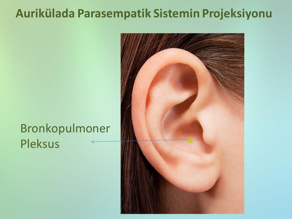 Bronkopulmoner Pleksus Aurikülada Parasempatik Sistemin Projeksiyonu