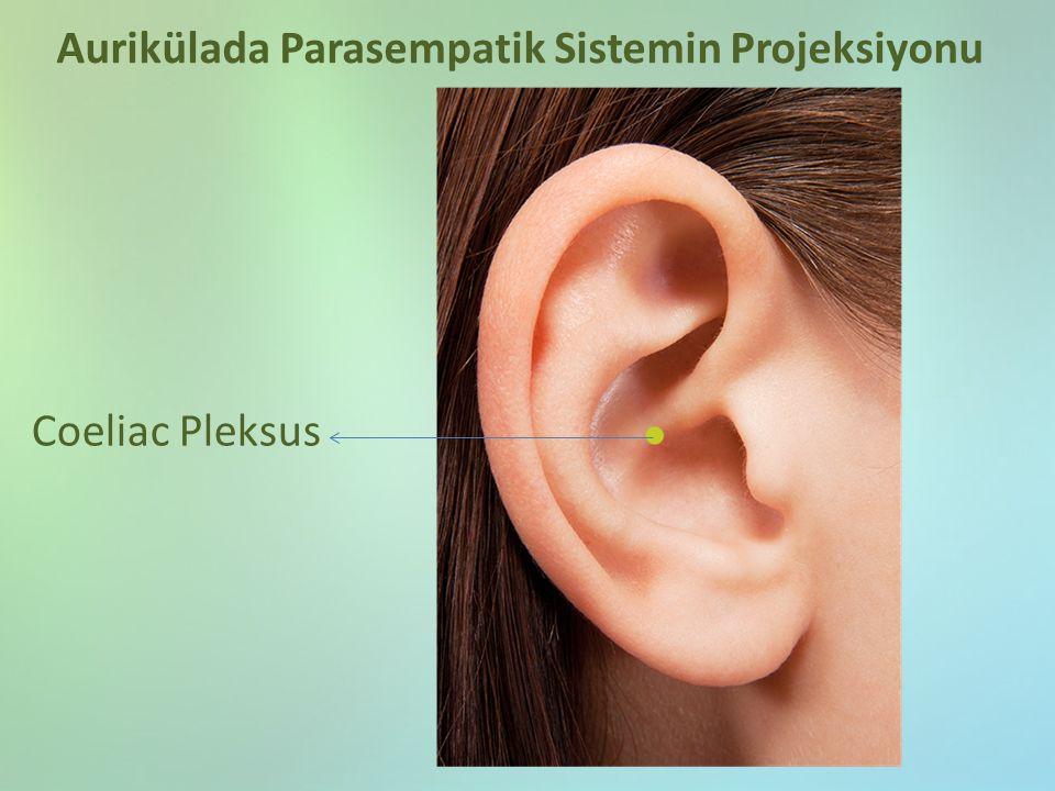 Coeliac Pleksus Aurikülada Parasempatik Sistemin Projeksiyonu
