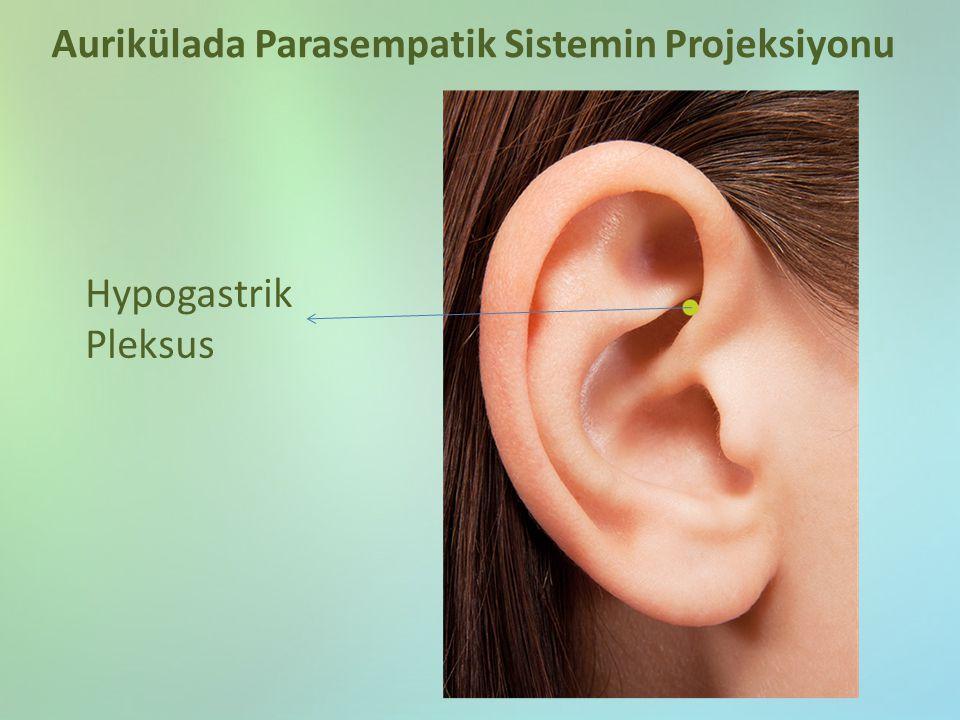Hypogastrik Pleksus Aurikülada Parasempatik Sistemin Projeksiyonu