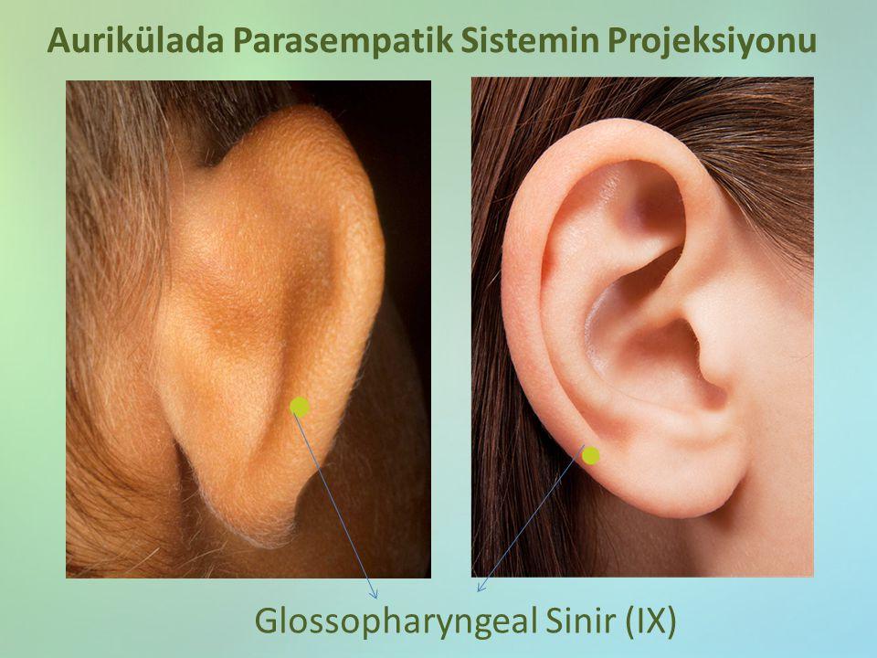 Glossopharyngeal Sinir (IX) Aurikülada Parasempatik Sistemin Projeksiyonu