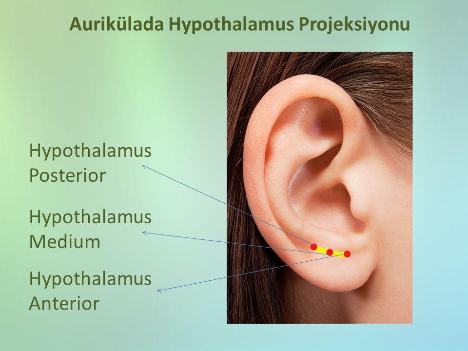 Hypothalamus Posterior Aurikülada Hypothalamus Projeksiyonu Hypothalamus Medium Hypothalamus Anterior