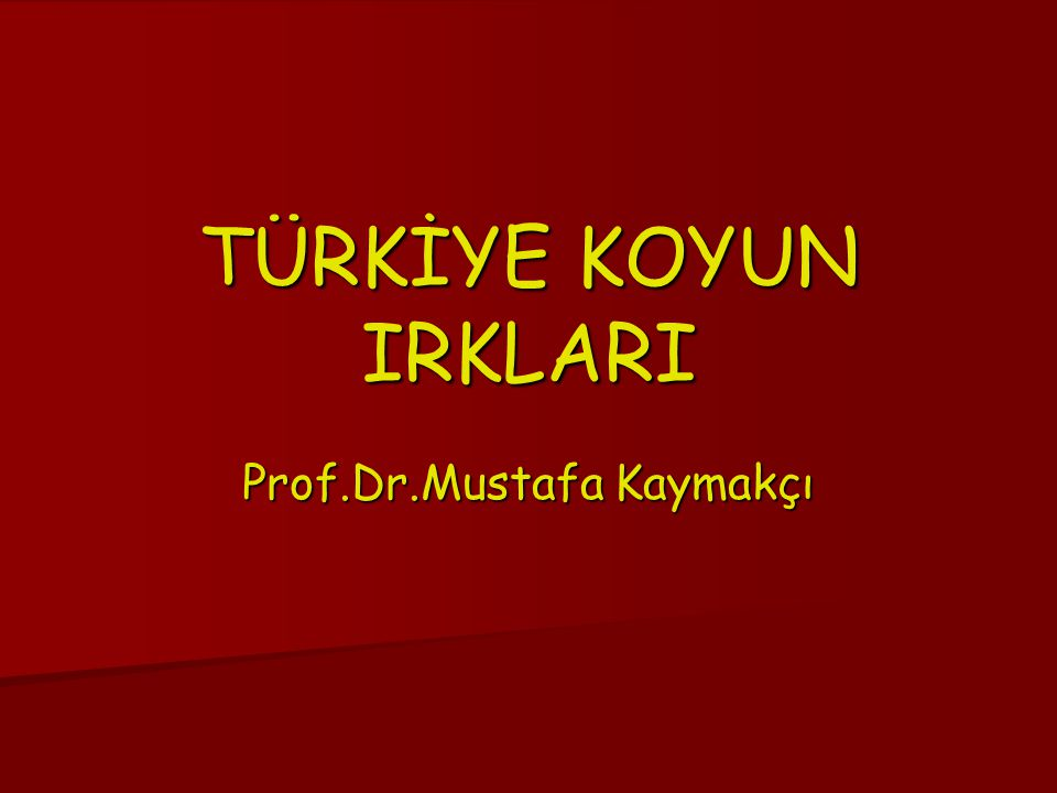 Prof.Dr.Mustafa Kaymakçı TÜRKİYE KOYUN IRKLARI