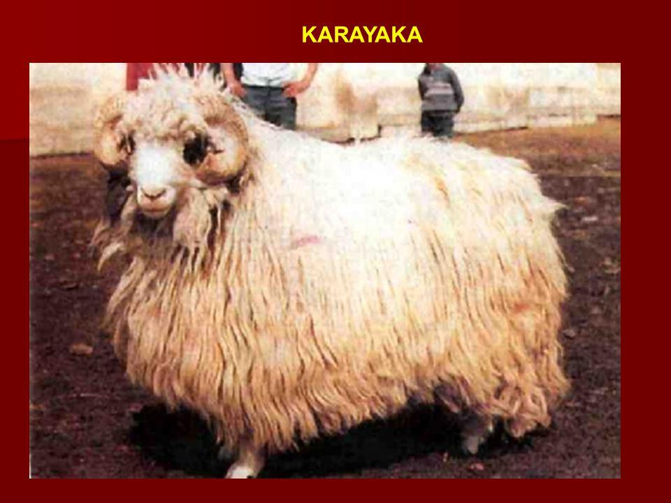 KARAYAKA
