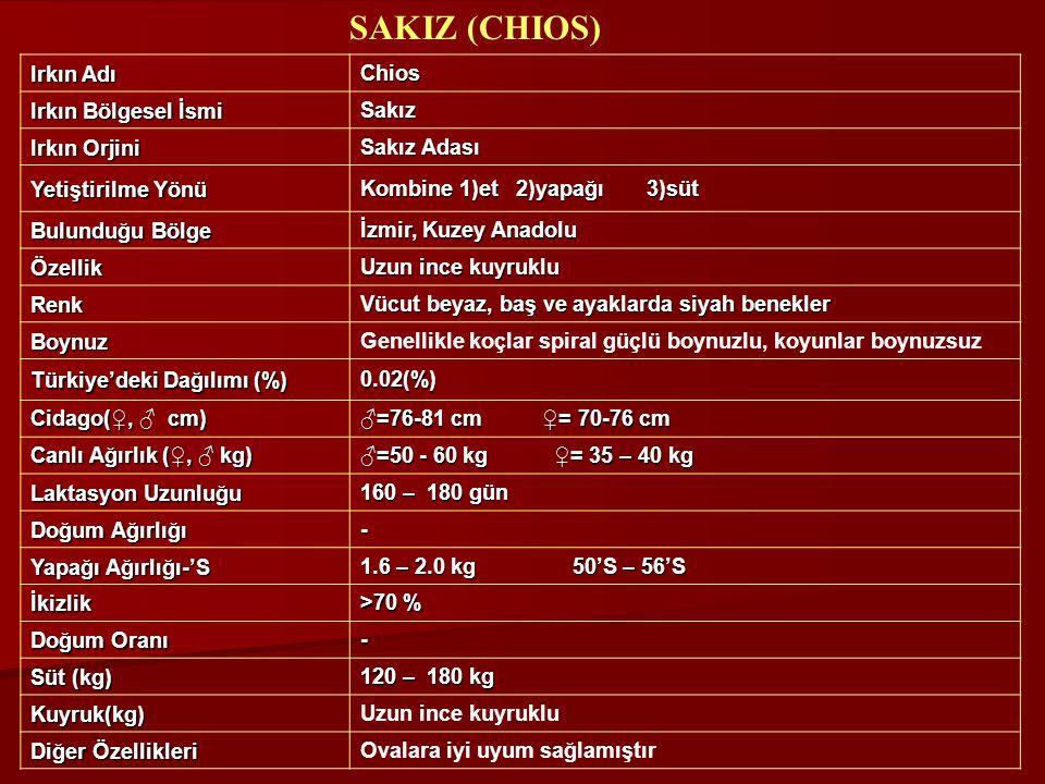 Irkın Adı Chios Irkın Bölgesel İsmi Sakız Irkın Orjini Sakız Adası Yetiştirilme Yönü Kombine 1)et 2)yapağı 3)süt Bulunduğu Bölge İzmir, Kuzey Anadolu
