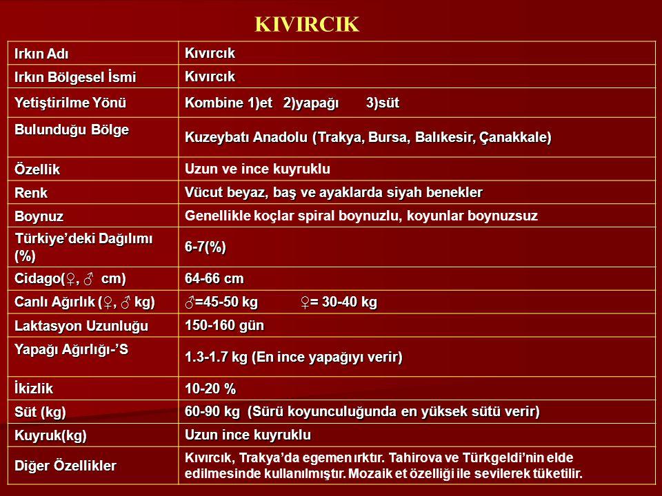 Irkın Adı Kıvırcık Irkın Bölgesel İsmi Kıvırcık Yetiştirilme Yönü Kombine 1)et 2)yapağı 3)süt Bulunduğu Bölge Kuzeybatı Anadolu (Trakya, Bursa, Balıke