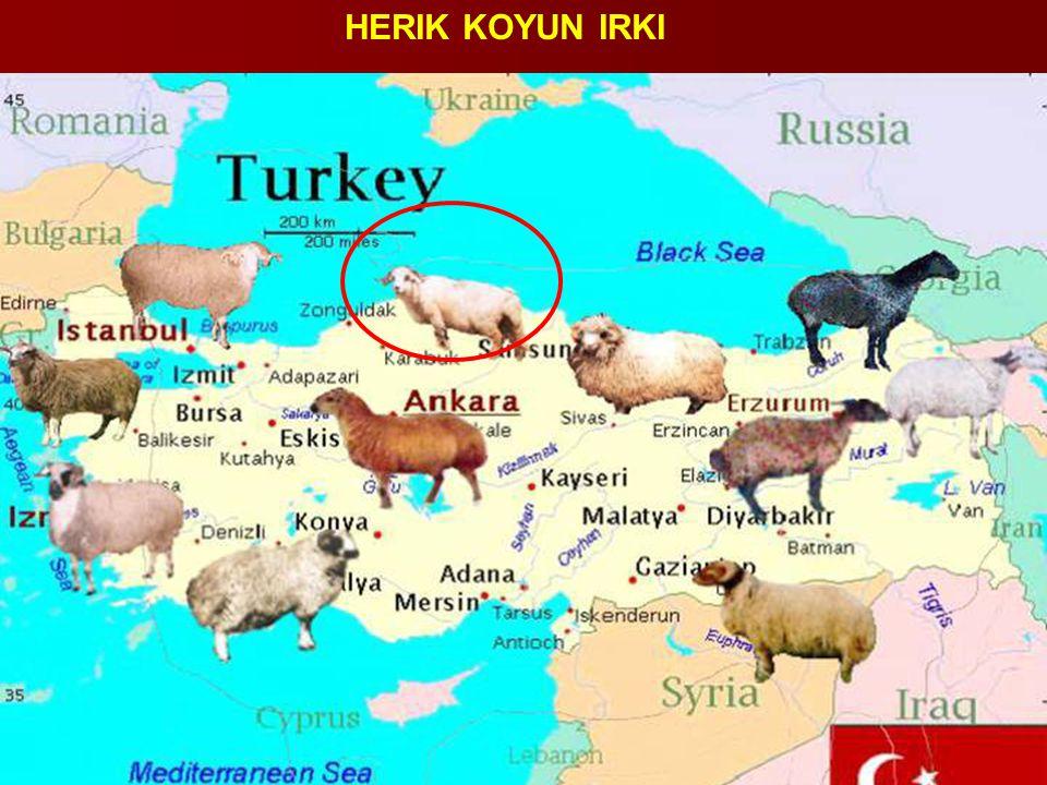 HERIK KOYUN IRKI