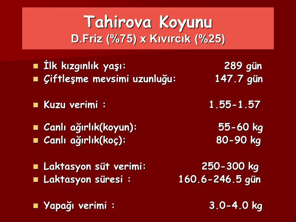 Tahirova Koyunu D.Friz (%75) x Kıvırcık (%25) İlk kızgınlık yaşı: 289 gün İlk kızgınlık yaşı: 289 gün Çiftleşme mevsimi uzunluğu: 147.7 gün Çiftleşme