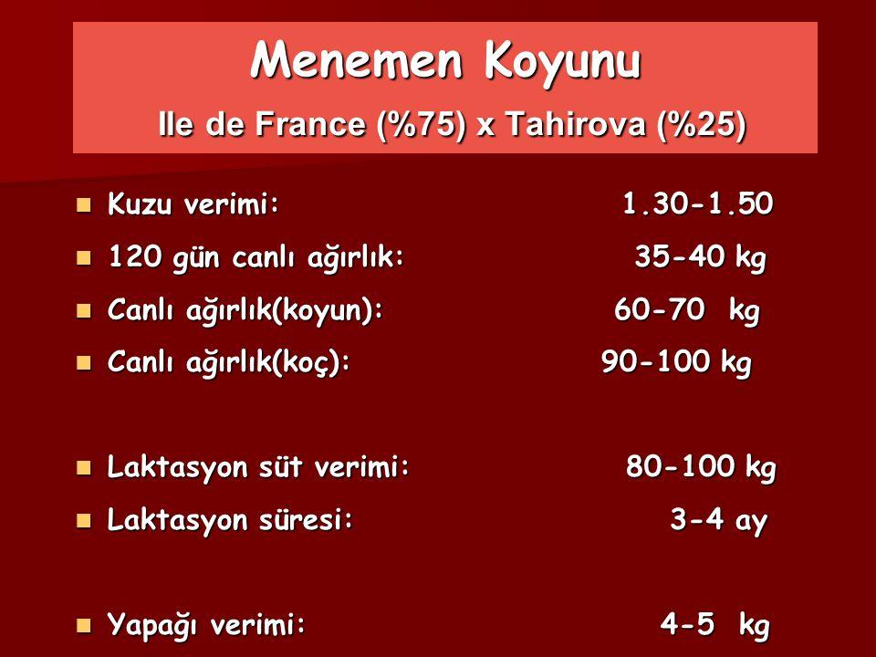 Menemen Koyunu Ile de France (%75) x Tahirova (%25) Kuzu verimi: 1.30-1.50 Kuzu verimi: 1.30-1.50 120 gün canlı ağırlık: 35-40 kg 120 gün canlı ağırlı
