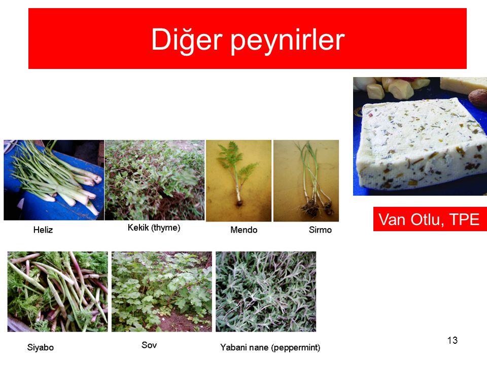 13 Diğer peynirler Van Otlu, TPE