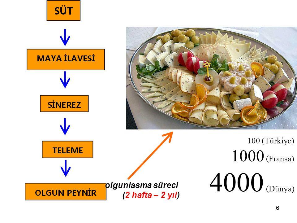 6 olgunlasma süreci (2 hafta – 2 yıl) 100 (Türkiye) 1000 (Fransa) 4000 (Dünya)