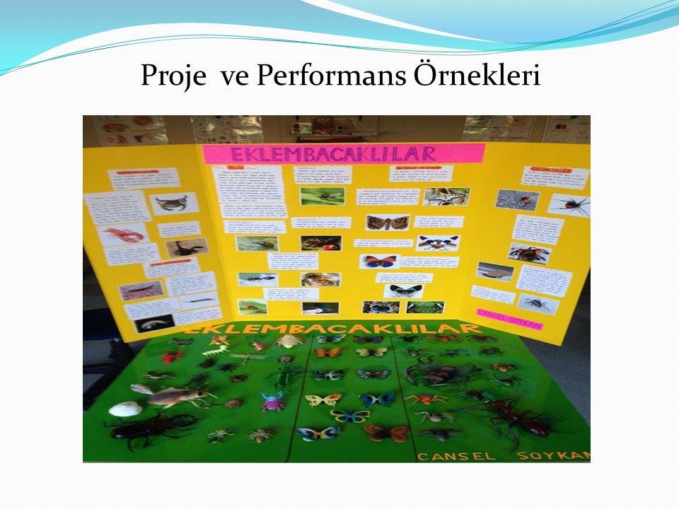 Proje ve Performans Örnekleri