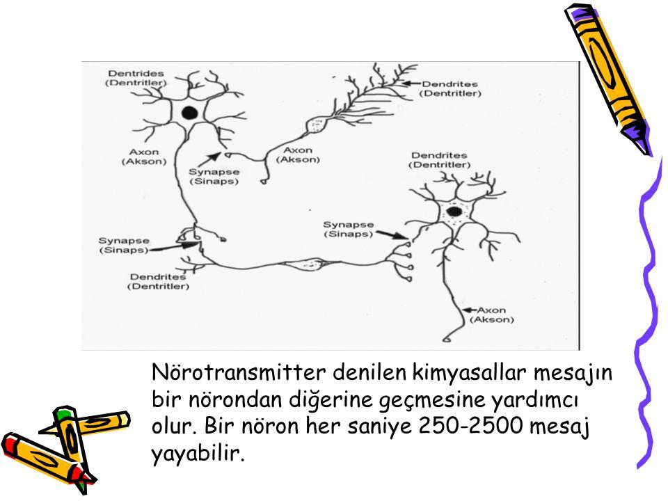 Nörotransmitter denilen kimyasallar mesajın bir nörondan diğerine geçmesine yardımcı olur. Bir nöron her saniye 250-2500 mesaj yayabilir.