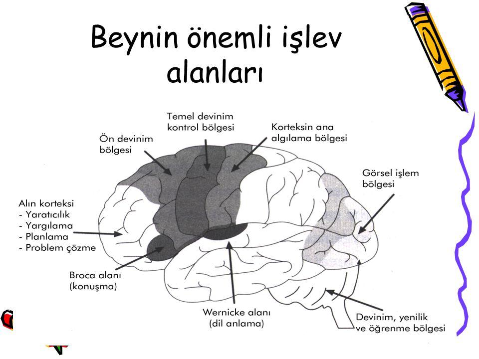 Beynin önemli işlev alanları